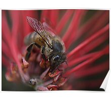 Bee-utiful  on Red Poster