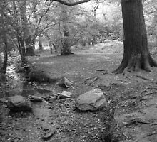 """""""Roots on the Waters Edge""""  Swithland Woods, Leicestershire by Anita  Fletcher"""