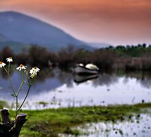 Fake Daisies by Murat A CICEK