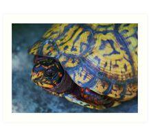 Box Turtle 2 Art Print