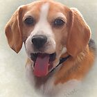 Beagle Dog Portrait by Sarahbob