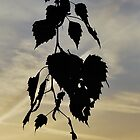 Hanging Leaves. by relayer51