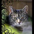 Tabby cat in Decorative Frame by Sarahbob