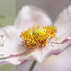 Japanese Anemone by cards4U