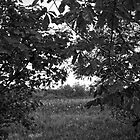 Through the leaves by James Taylor
