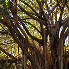 Southbank Parklands Tree by Jaxybelle