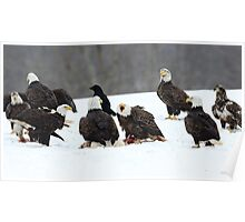 Bald Eagle Convention Poster