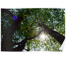 Rays Through the Branches Poster