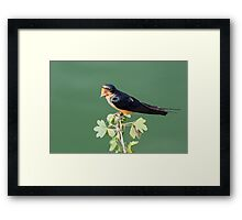 Tweet! Framed Print