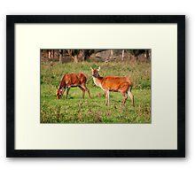 Two Old Ladies - Red Deer Framed Print