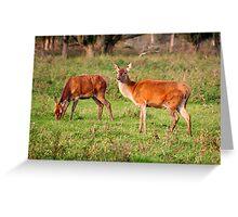 Two Old Ladies - Red Deer Greeting Card