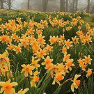 Field of Spring by Karol Livote