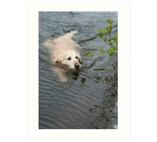 Gemma has a swim in the River Barrow Art Print