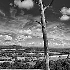 the burnt tree, montgomery by mortonboy