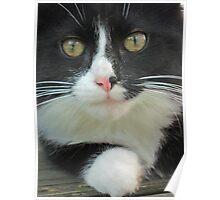 Kitty Kat-Kitty Kat, I Love You Poster