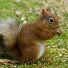 The Squirrel On Our Lawn by Jamie  Green
