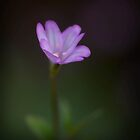 Fragile Beauty by geoff curtis