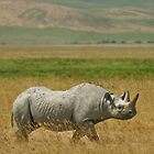 Black rhino strut by Owed to Nature