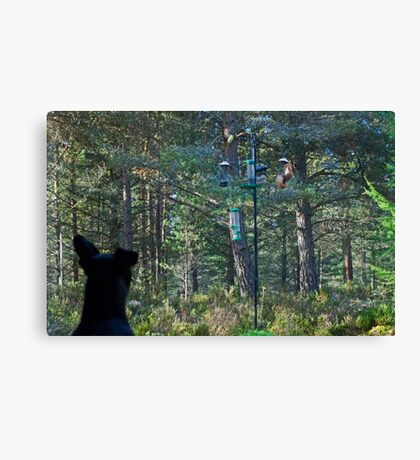 The Terrier's Scottish Torment Canvas Print