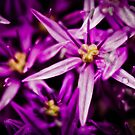 Purple Allium Flower by Paul Richards