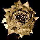 Sepia Tone Rose2 by Jennifer P. Zduniak