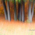 Trees - 31 - Impressions by Yannik Hay