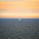 Sailboat in Sunset-Cape May NJ by Jennifer P. Zduniak