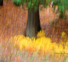 Trees - 30 - Impressions by Yannik Hay