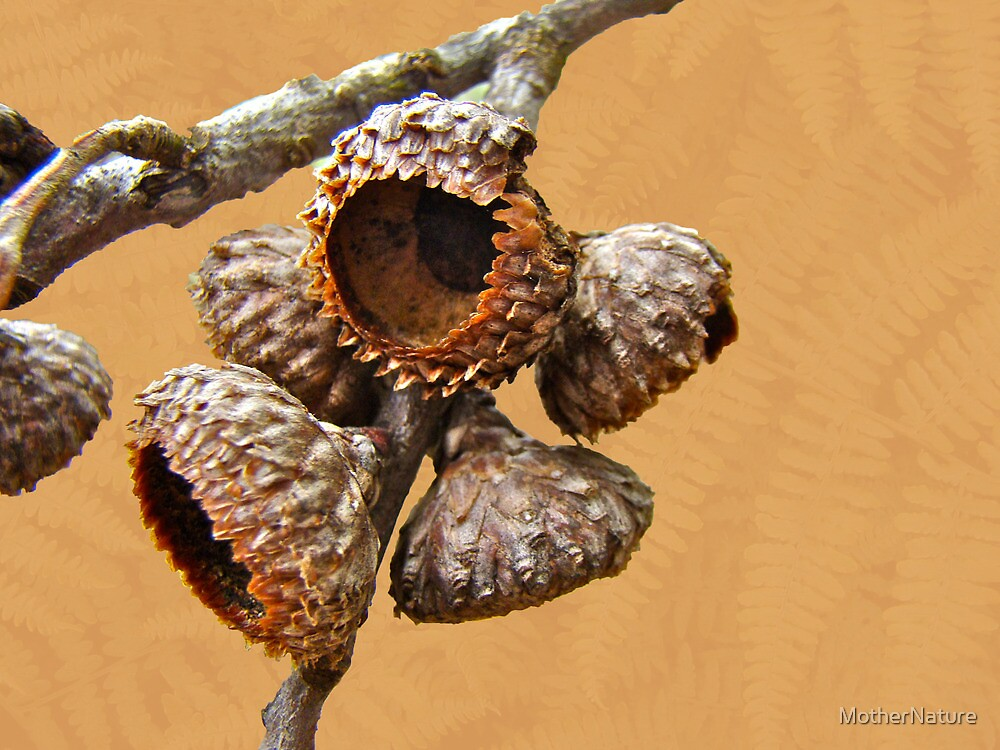 Where Acorns Come From by MotherNature