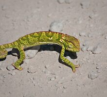 Chameleon road by Owed to Nature
