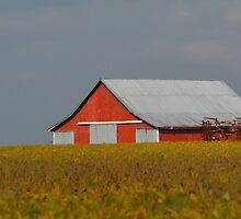 Red Barn Amid the Beans by Sheryl Gerhard