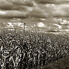 Creepy Cornfield by Kathilee