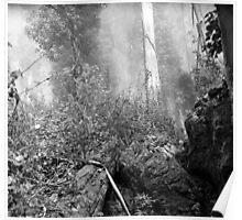 Eucalypti of Mount Sutro Poster