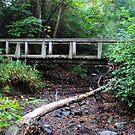 Uwharrie Trail Bridge by lroof