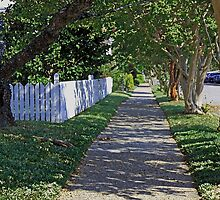 Tree Lined Street by WeeZie