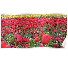 Panoramic Red to Yellow - Floriade 2011 Poster