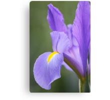 Iris Perfection - Floriade 2011 Canvas Print