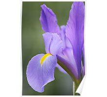 Iris Perfection - Floriade 2011 Poster