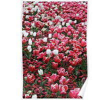 Strawberry with a Dash of Cream - Floriade 2011 Poster
