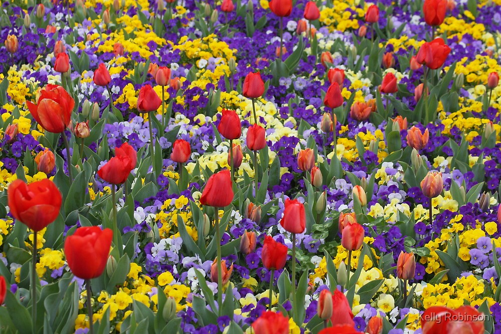 Blast of Colour - Floriade 2011 by Kelly Robinson