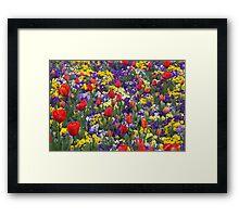 Blast of Colour - Floriade 2011 Framed Print