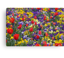 Blast of Colour - Floriade 2011 Canvas Print