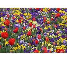 Blast of Colour - Floriade 2011 Photographic Print