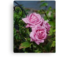 Autumn Roses Canvas Print