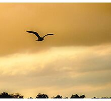 Seagull in Flight - for George  Photographic Print