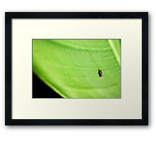 Only if I could be a fly on a leaf Framed Print