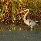Autumn in the Marsh by Bill McMullen