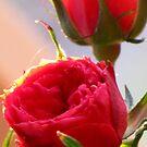 Parade Roses by Nicki Baker