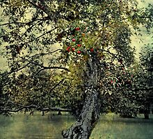 The Apple Tree by Scott Mitchell