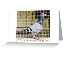 Mr Blue Bar Greeting Card